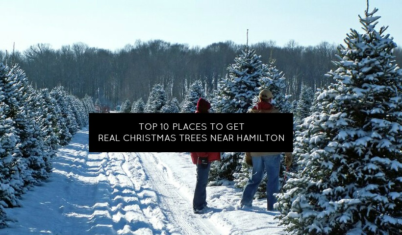 Top 10 Places near Hamilton to get a REAL Christmas Tree